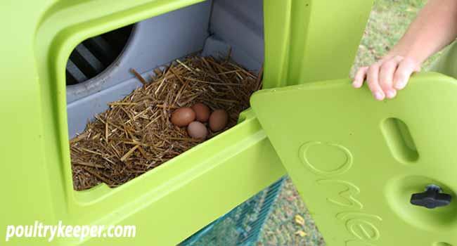 Chicken Coop Nest Box