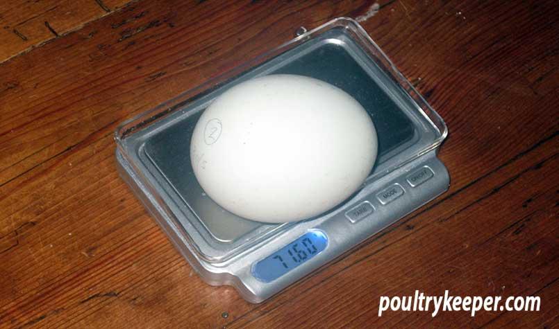 Weighing an Egg