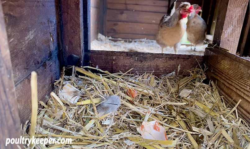 Broken Egg in Nest Box