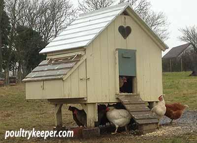 Chicken House Raised