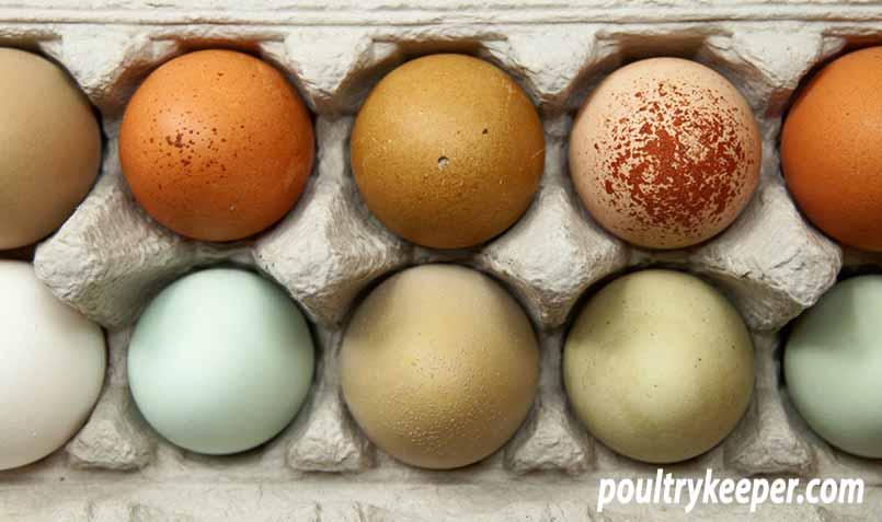 Coloured Eggs in Eggbox