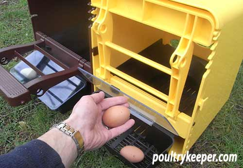 Eggs in a Chickbox