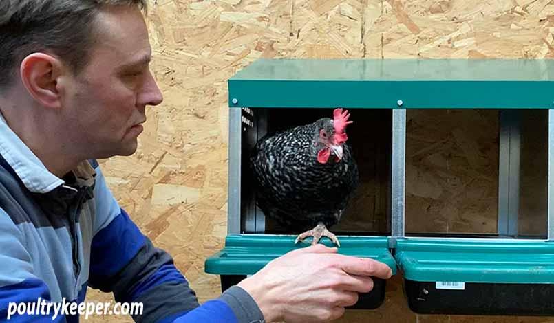 Chicken in Nest Box
