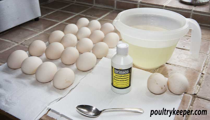 How to Clean Eggs For Incubation
