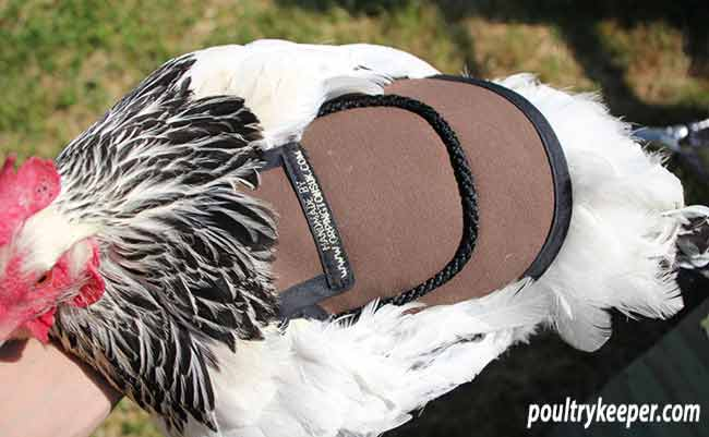Poultry Saddle
