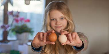 Are Brown Eggs Healthier Than White Eggs
