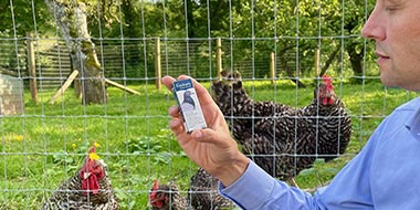 Ivermectin for Chickens