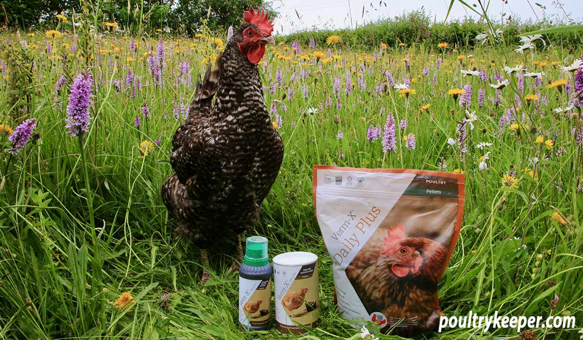 Verm-X for Chickens