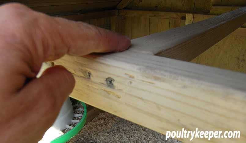 Rubbing Diatomatious Earth into a chicken house perch