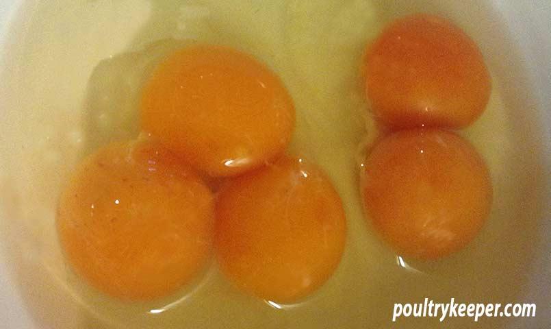 Double and Triple Yolk Eggs