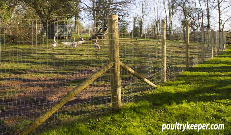 Poultry Fence for Geese