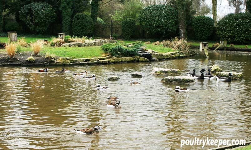 Wildfowl Pond