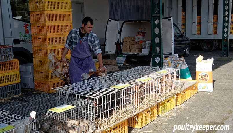 Chicken Market in France