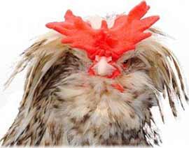 Cuckoo Houdan Head