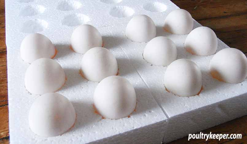 Selling Hatching Eggs