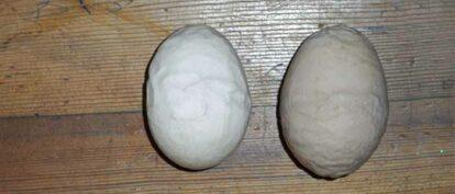 Wrinkled Egg Shells Infectious Bronchitis