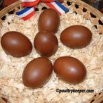 Dark Brown Copper Black Marans Eggs