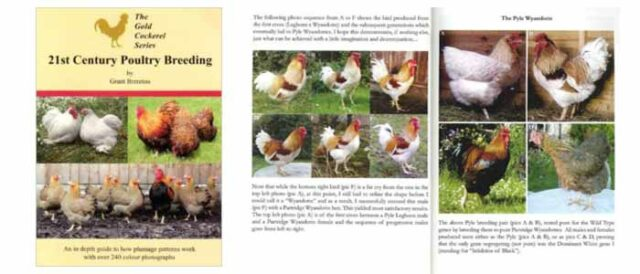 21st Century Poultry Breeding Book Review
