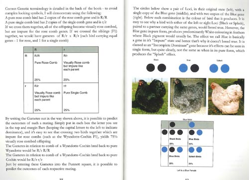 21st Century Poultry Breeding Book Page