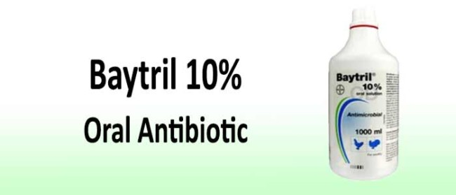 Baytril Antibiotic