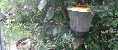 Red Top Fly Traps