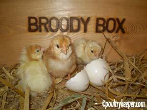 Broody Box