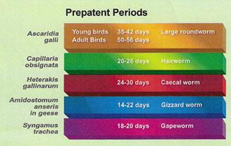 Prepatent Periods