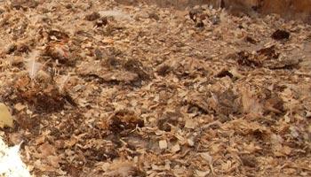 Soiled Sawdust