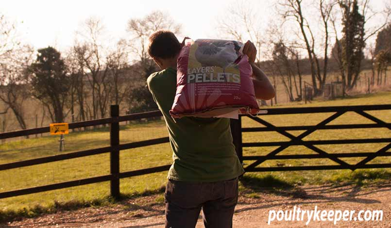 Carrying Chicken Feed