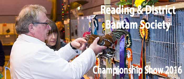 Reading Bantam Show 2016