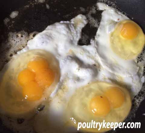 Four Yolk Egg