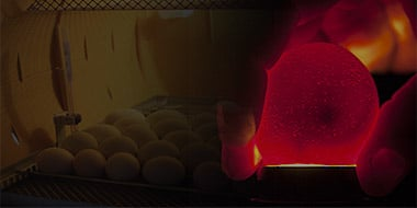 Candling Eggs