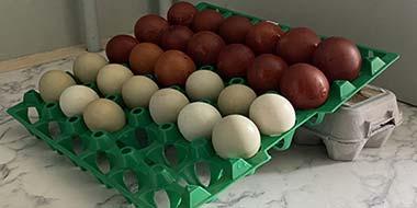 Storing Hatching Eggs