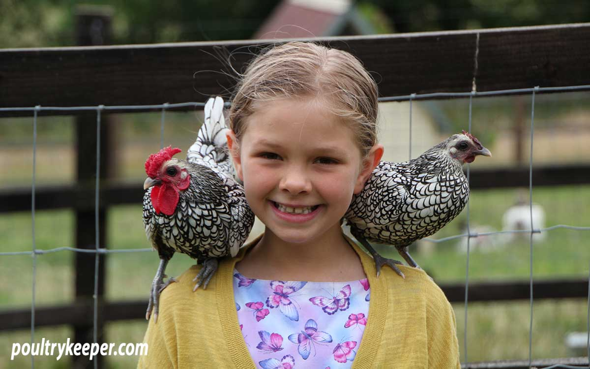 Sebright Bantams on child's shoulders