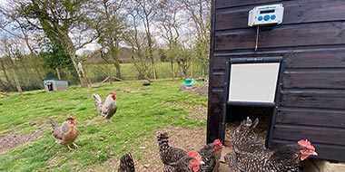 Chicken Guard Automatic Chicken Door