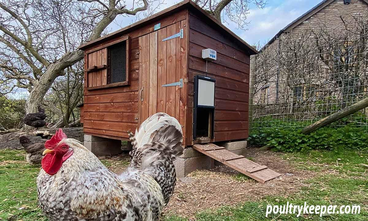 Chicken Guard Automatic Door Opener