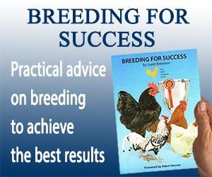 Breeding for Success Banner