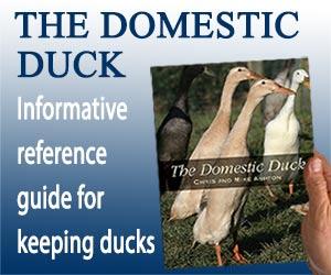 Domestic Duck Banner