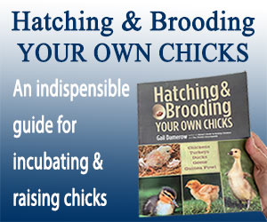 Hatching & Brooding Banner