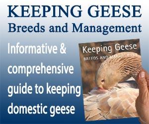 Keeping Geese Banner