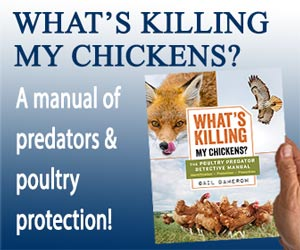 Whats Killing My Chickens Banner