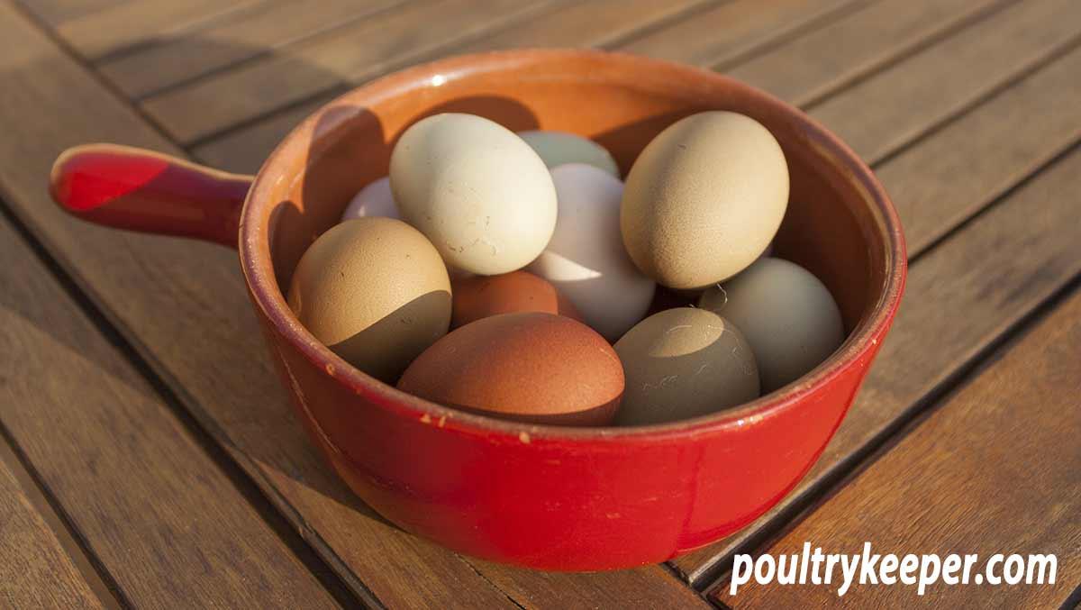 Chicken Eggshell Colours