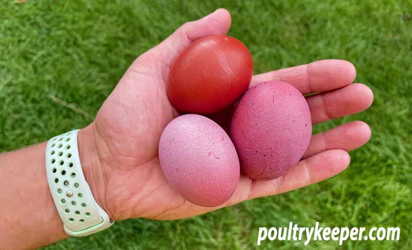 Purple Eggshells